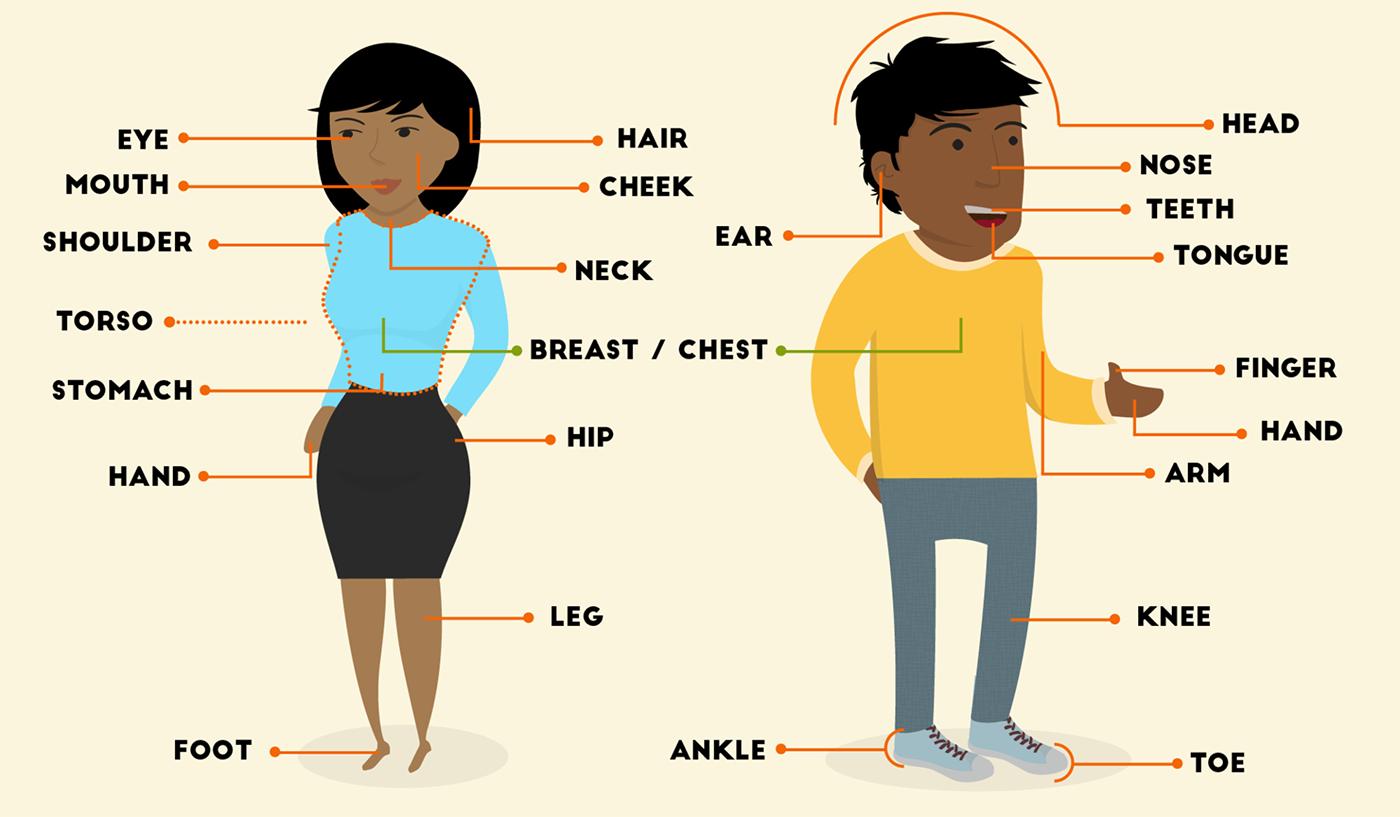Partes del cuerpo en inglés.